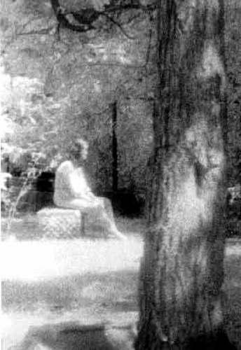 Batchelor grove