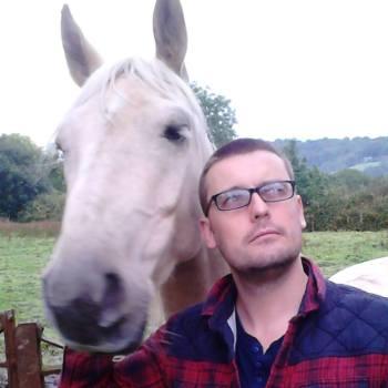 gav-horse