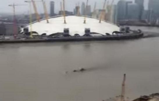 Thames beast