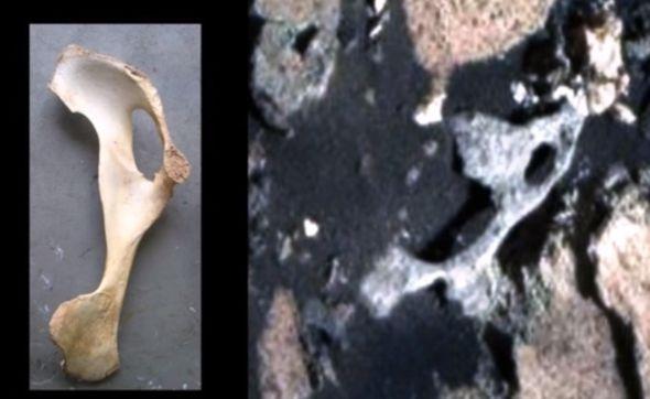Mars-Bones-981304