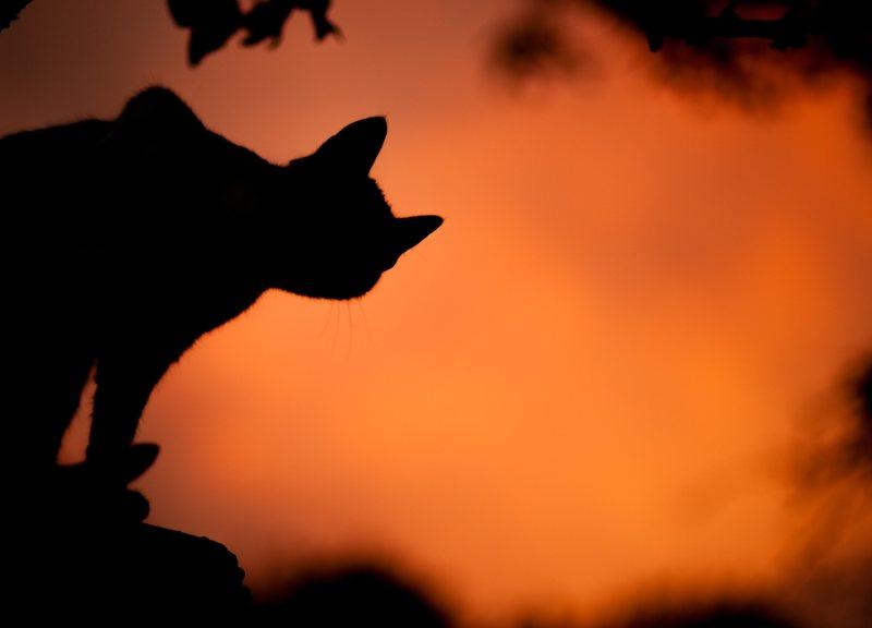 demon cat 1