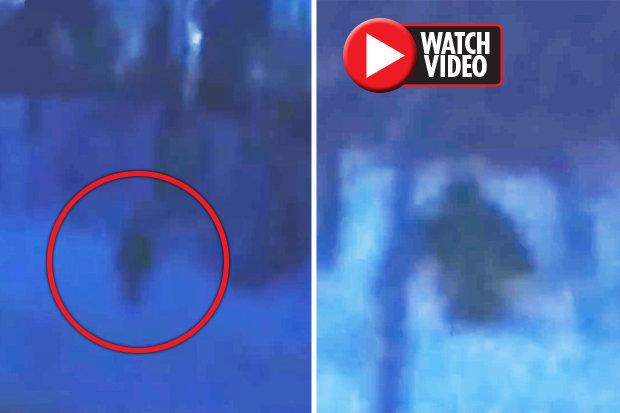 Was-BigfootIs-Bigfoot-roaming-Russia-Bizarre-ape-like-figure-spotted-695815