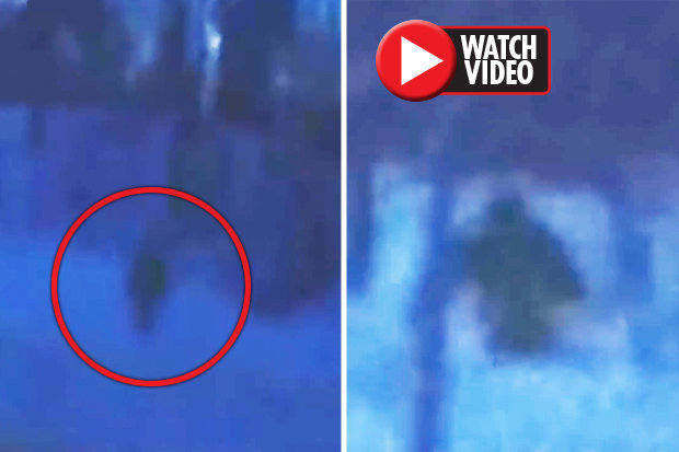 Was-BigfootIs-Bigfoot-roaming-Russia-Bizarre-ape-like-figure-spotted-695815