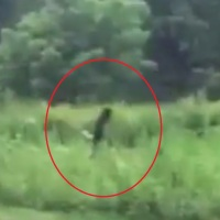 New Bigfoot sighting & where to see it!