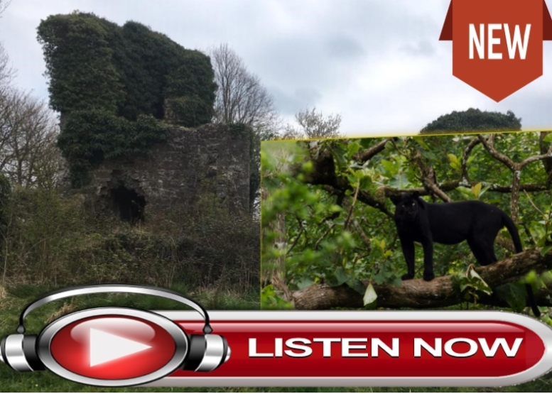clay lane cat listen now